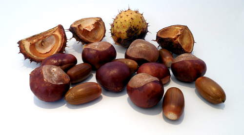 castagne albero