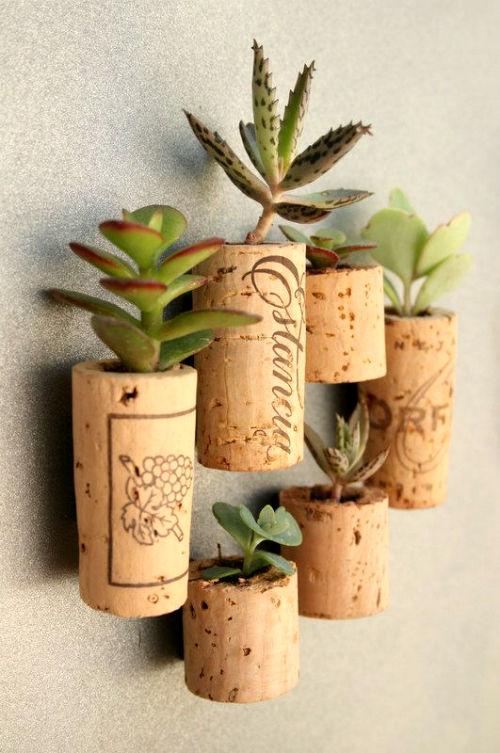 vasetti sughero piante grasse